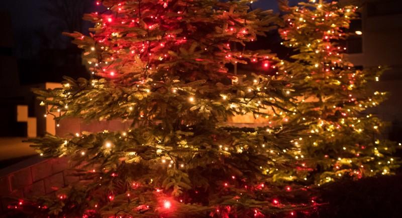 София - Коледа